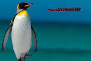 امپراتوری پنگوئن
