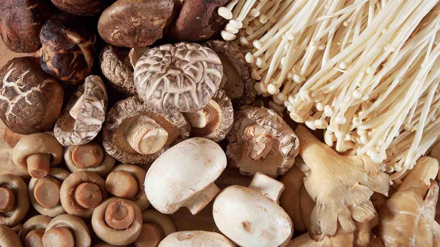 کنسرو قارچ خوراکی